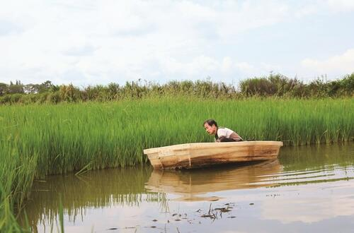 新飞村:宋德坤利用稻虾,谱写美满生活