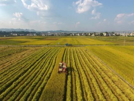 """湖南粮食集团发布多款新品,让全民共享""""湘粮品质"""""""